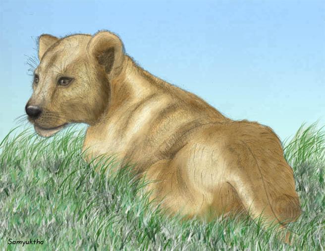 lion cub (not disney :D)